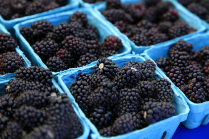 blackberries in containers